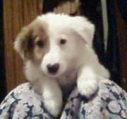 Дарю щенка 3, 5 месяца в хорошие руки