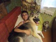Витебск подарю собаку
