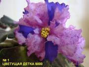 Фиалка(цветок/детка/лист недорого) продам Витебск