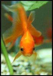 аквариумные гидробионты