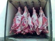 куплю говядину до 4 тонн