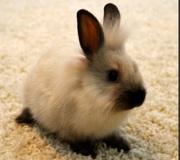 Декаротивные кролики Витебске