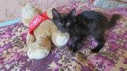 Mилый добрый робкий чёрненький котёнок ищет дом,  где его полюбят!