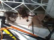 Котята ждут вас!